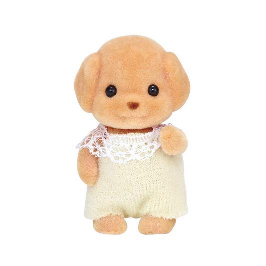 トイプードルの赤ちゃん - 5