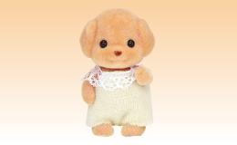 トイプードルの赤ちゃん